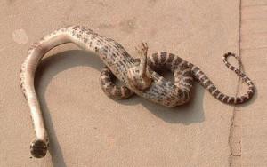 snake_1480967c